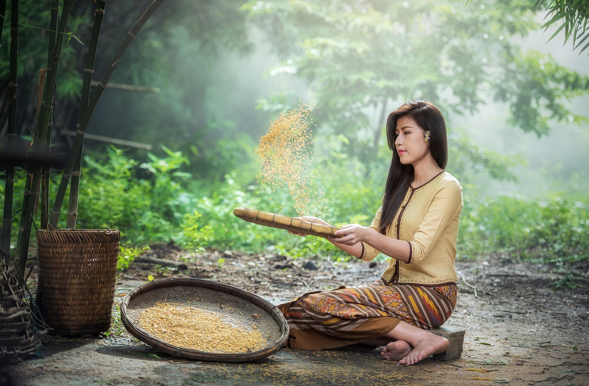 rice-1807554_1920